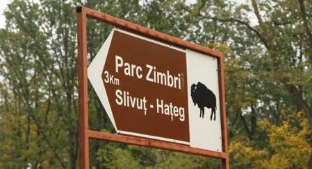rezervatia-de-zimbri-din-padurea-slivut-hateg-4929